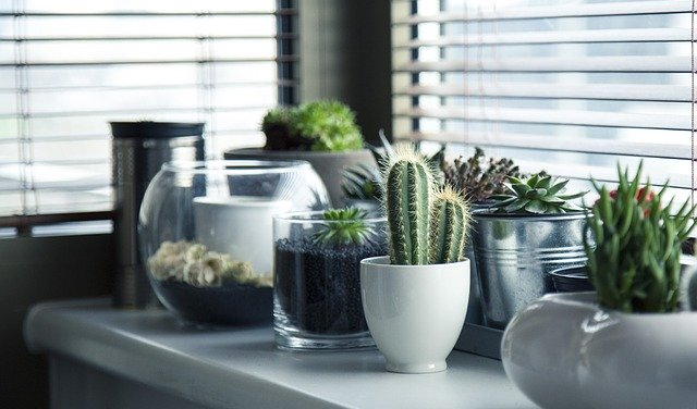 צמחיה במטבח